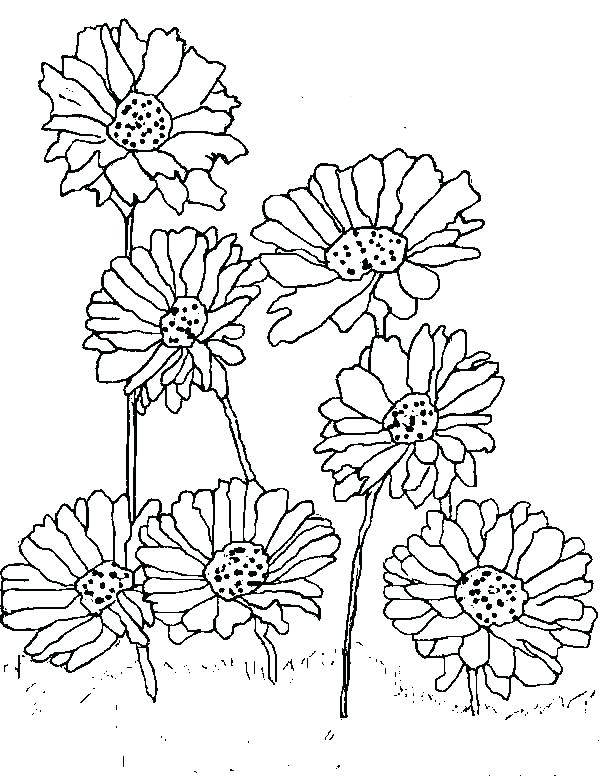 600x776 Daisy Coloring Page Cortefocal.site