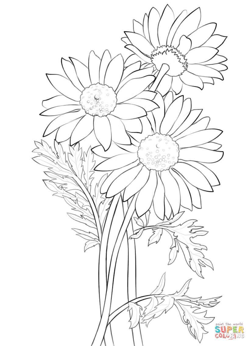 824x1138 Coloring Pages Daisy Flowers Coloring Page Fun