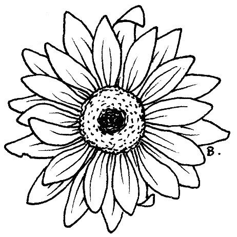 462x462 Daisy Coloring Pages