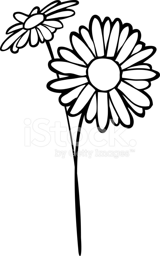 641x1024 Daisy Line Art Stock Vector