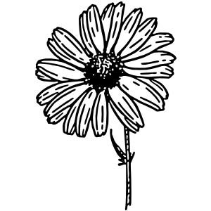 300x300 Daisy Lines Cliparts