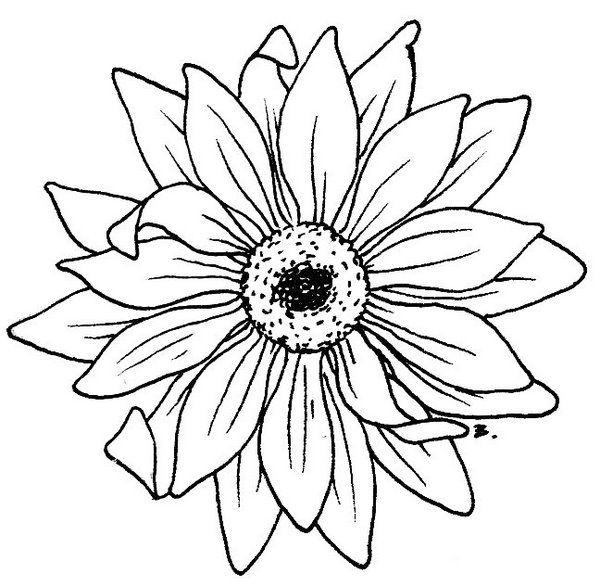 600x586 Gerber Daisy Drawing