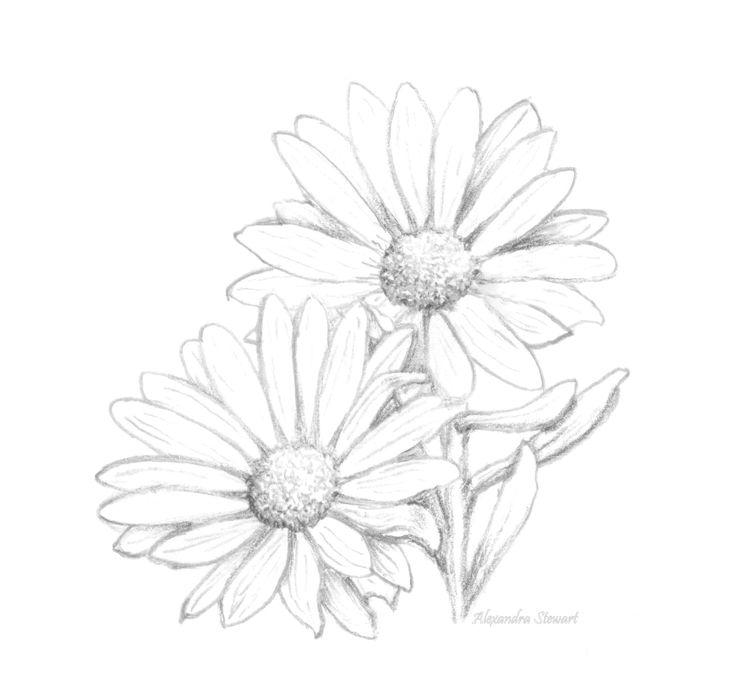Gerbera Daisy Line Drawing Daisy Line Drawing at ...