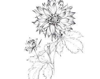 340x270 Sketch Print Etsy