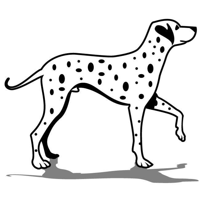 Dalmatian Dog Drawing At Getdrawings Com