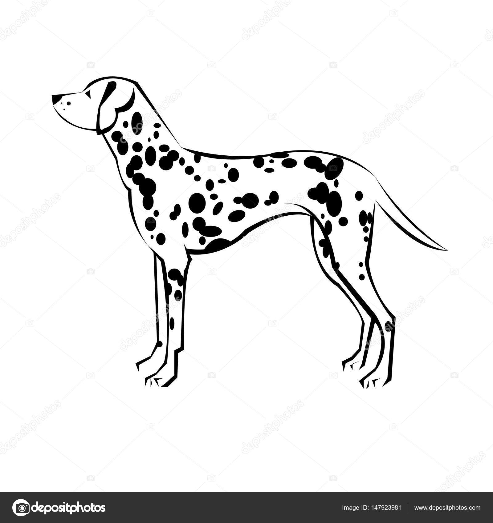 1600x1700 Dalmatian Vector Animal Illustration Mammal Background White Pet
