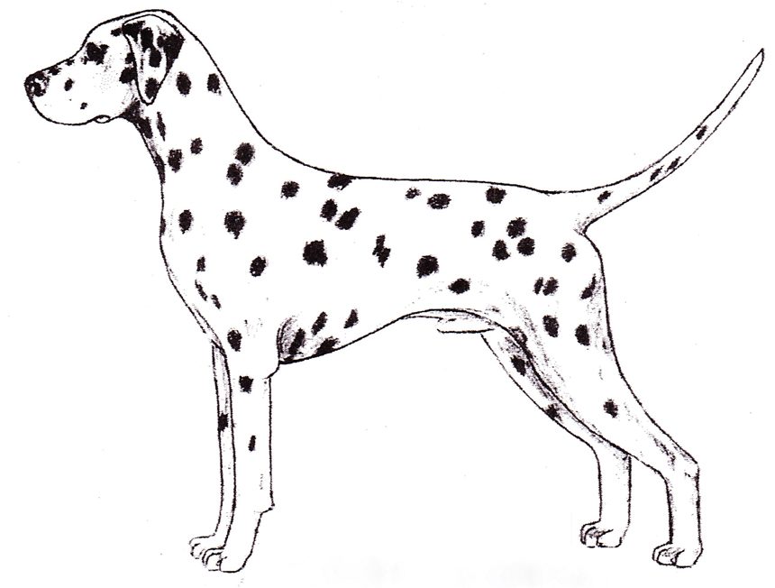 The Best Free Canine Drawing Images Download From 50 Free Drawings