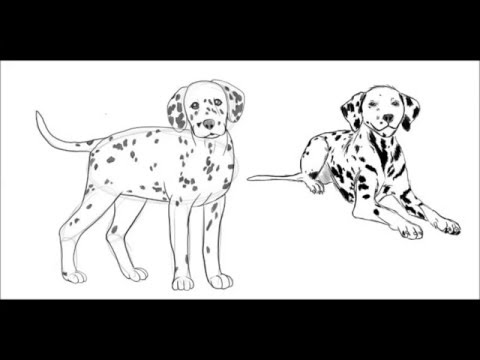 480x360 How To Draw A Dalmatian