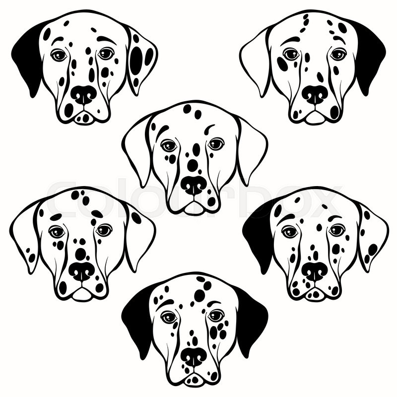 800x800 Vector Set Of Dalmatian's Face. Hand Drawn Vector Illustration