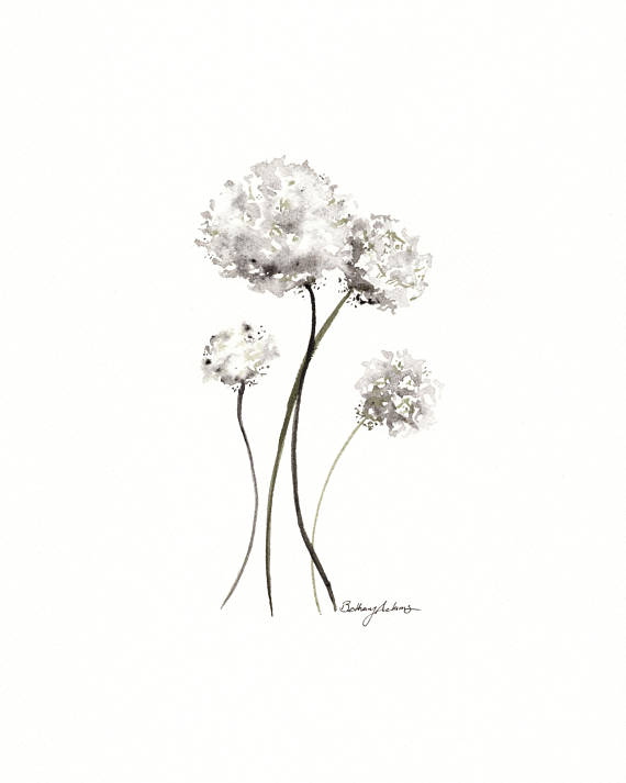 Dandelion Black And White Drawing
