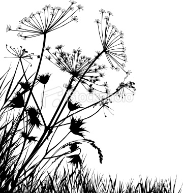 360x380 Meadow With Variable Grass. Google Images, Google And Silhouettes