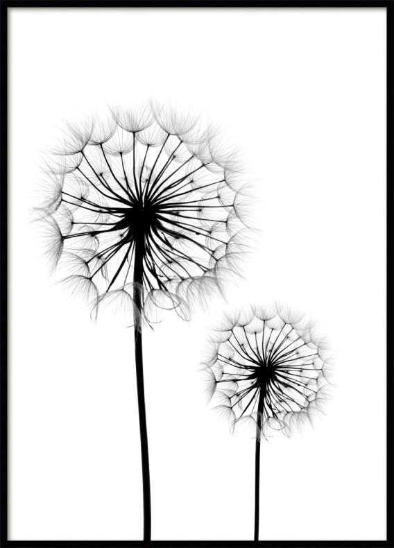 dandelion drawing at getdrawings com free for personal use