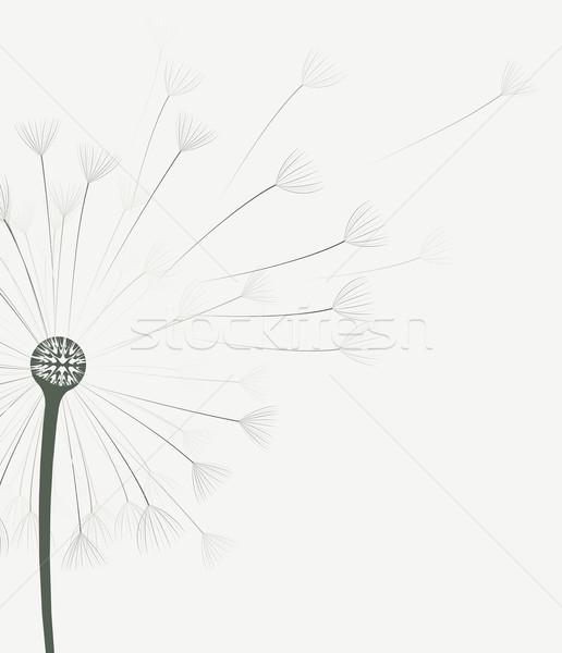Dandelion flower drawing at getdrawings free for personal use 516x600 vector dandelion flower vector illustration miroslava hlavacova mightylinksfo