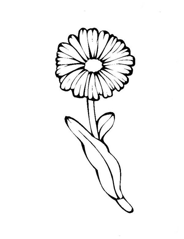Dandelion Flower Drawing At GetDrawings