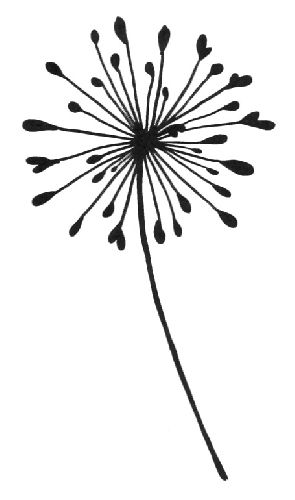 Dandelion Line Drawing