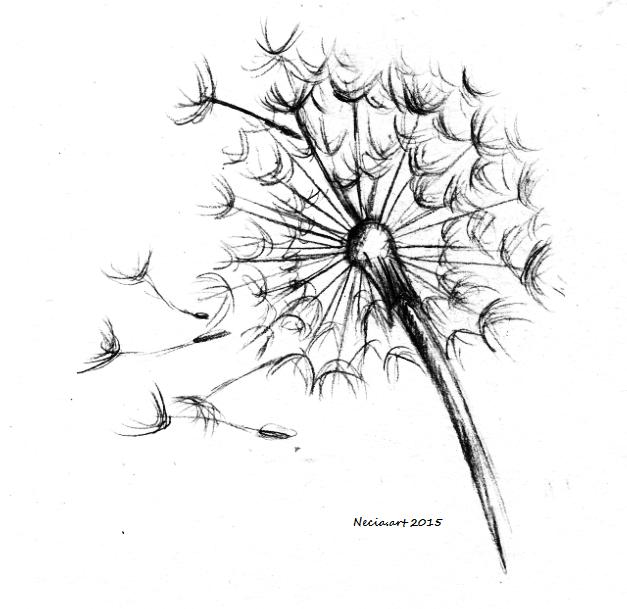 Dandelion Sketch Drawing