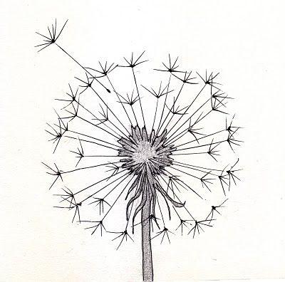Dandilion Drawing