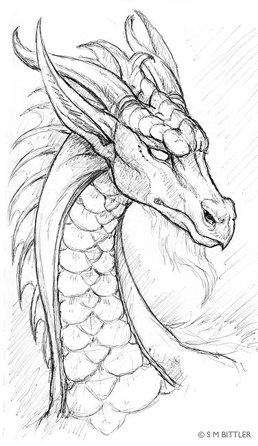 376x648 Photos Dragon Drawings In Pencil,