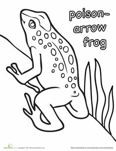 236x305 Clip Art Frogs Pasco Poison Dart Frog (Coloring Page)