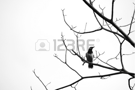 450x300 Dead Tree A Bird Isolated On White Stock Photo, Picture