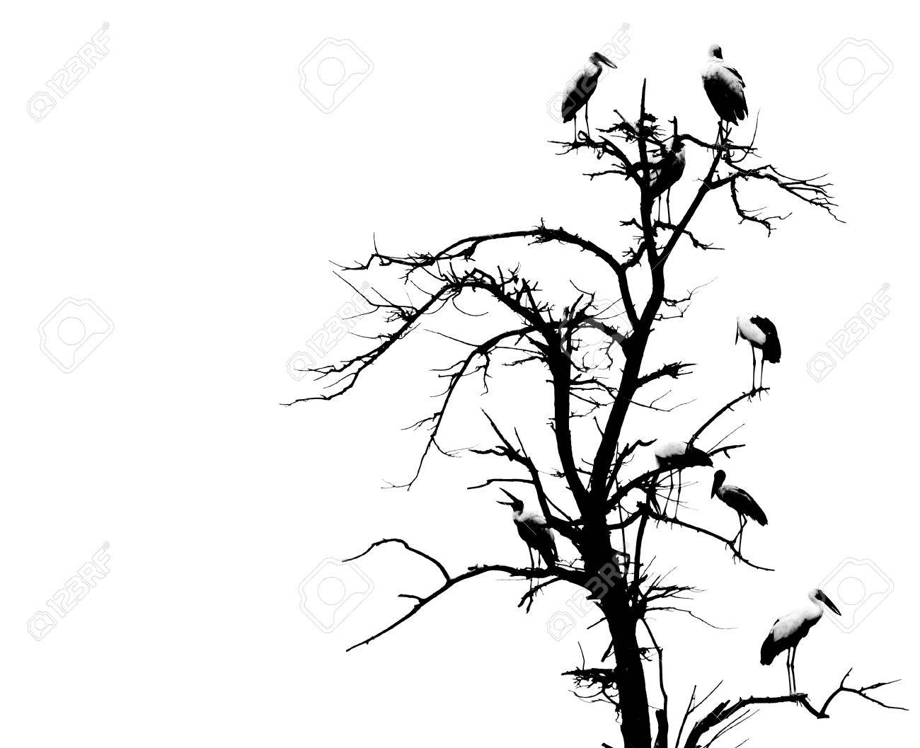 1300x1057 Dead Tree And Bird Background Stock Photo, Picture And Royalty