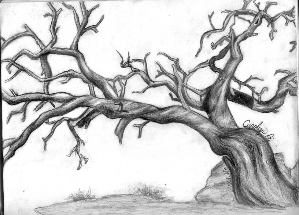 978x705 Dead Tree By Asdffds