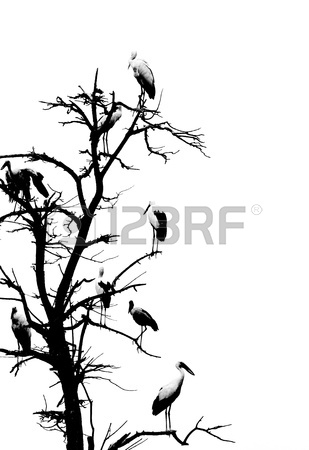 309x450 Hand Draw Sketch, Two Birds Stock Photo, Picture And Royalty Free