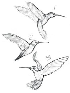 236x314 How To Draw A Bird Step By Step Easy With Pictures Bird