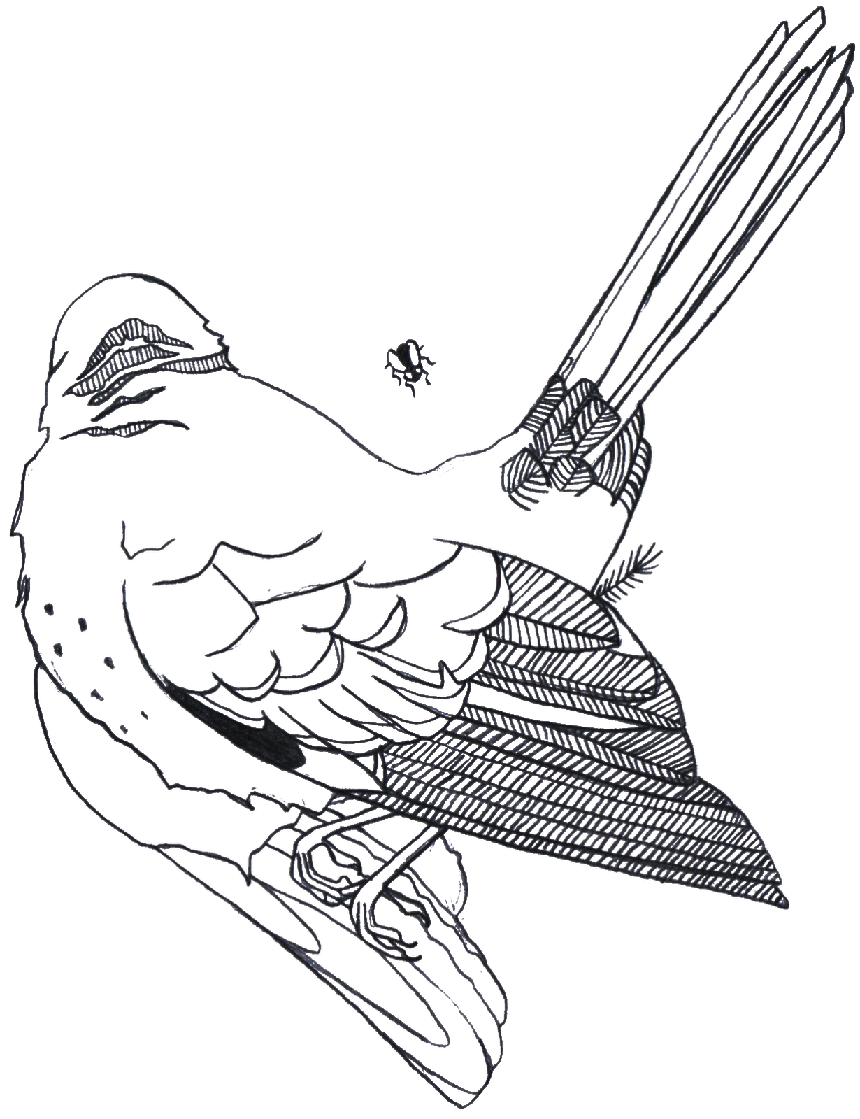 1230x1600 Lindsay Pulver Designs Dead Birds And A Coyote Series
