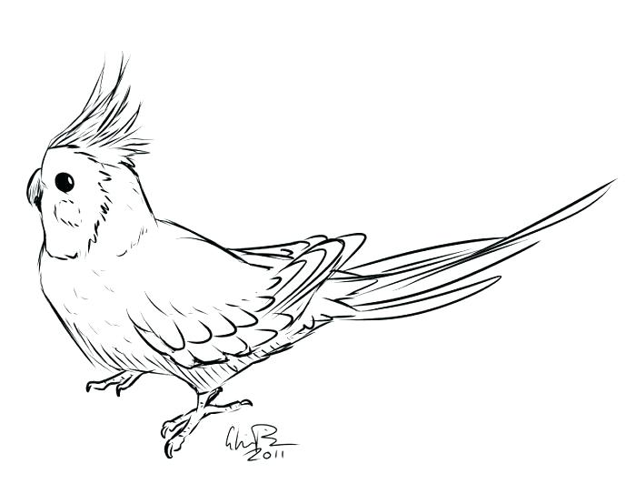 700x532 Robin Bird Coloring Pages Robin Bird On Dead Tree Branch Coloring