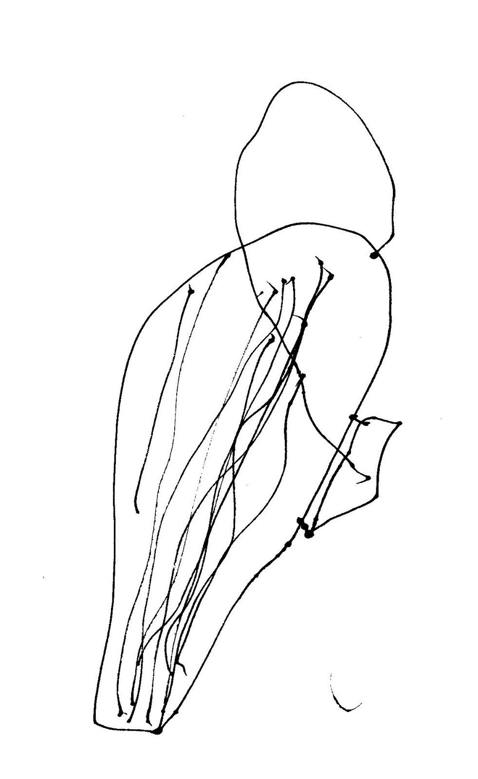 982x1600 A Terminal Case Of Whimsy Dead Bird