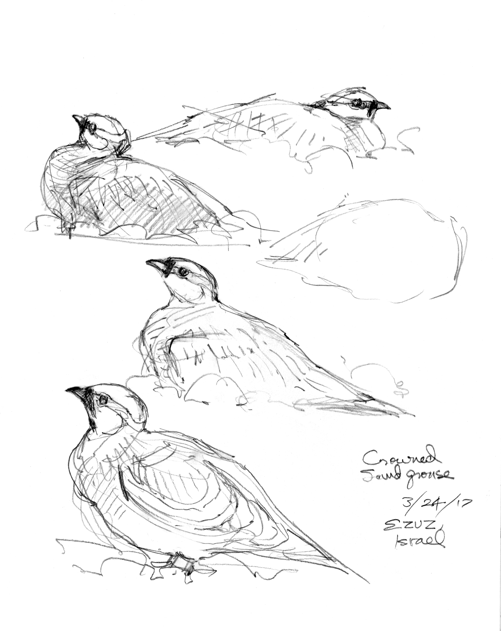 1904x2400 The Dead Sea Project Drawing The Motmot