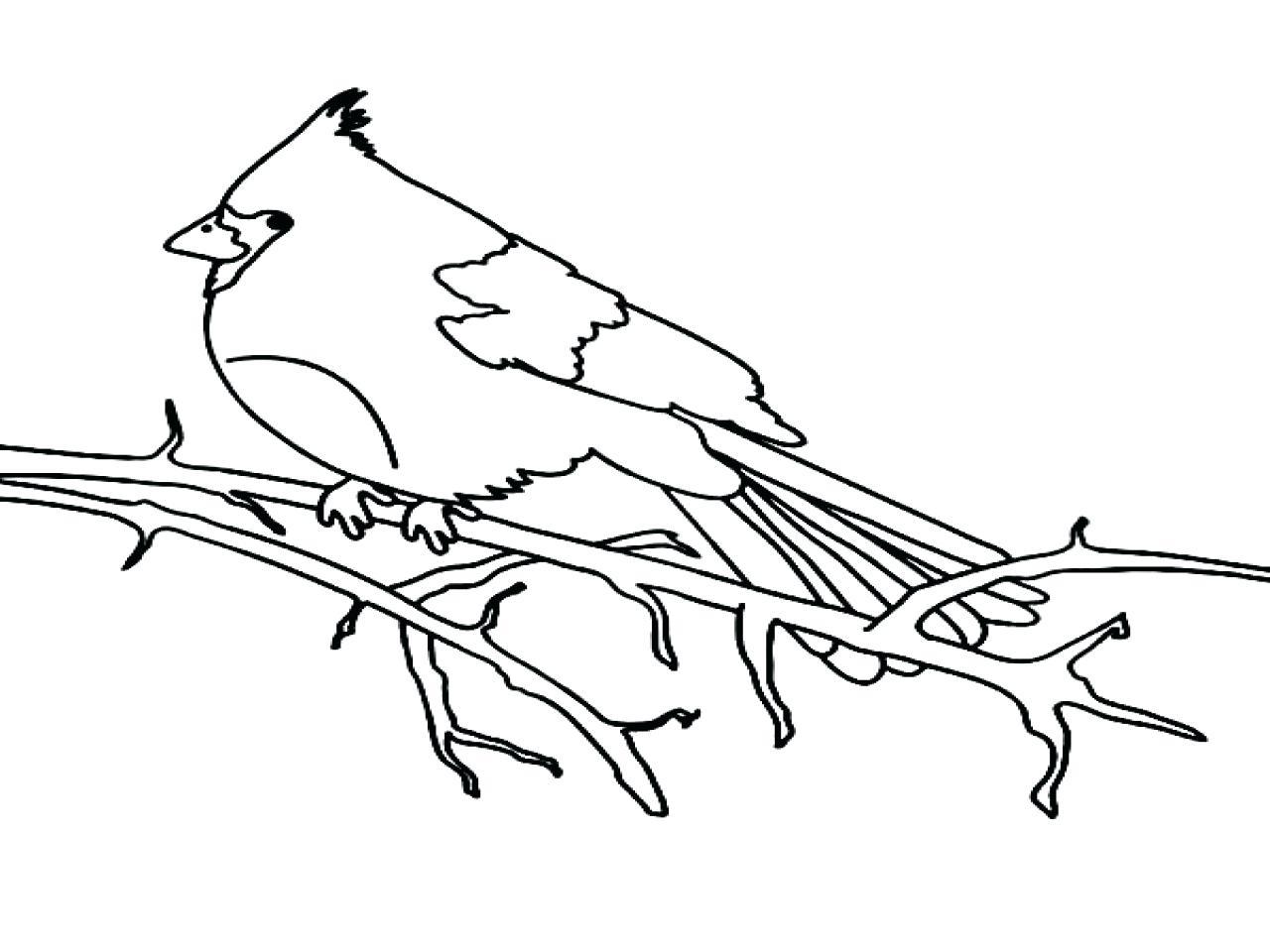 1280x960 Coloring Cardinal Bird Coloring Page