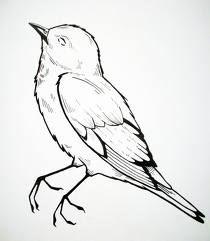 210x241 Dead Bird Art Drawings