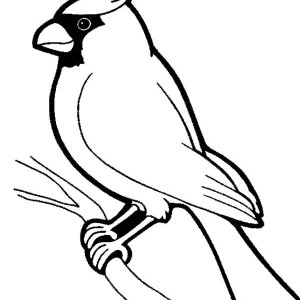 300x300 Cardinal Bird Stand On Dead Tree Branch Coloring Page Cardinal