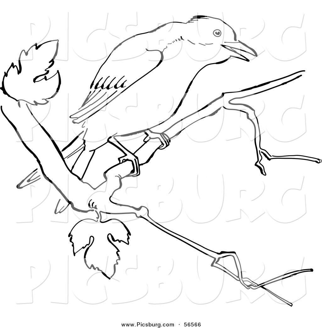 1024x1044 Clip Art Of A Mockingbird On A Tree Branch