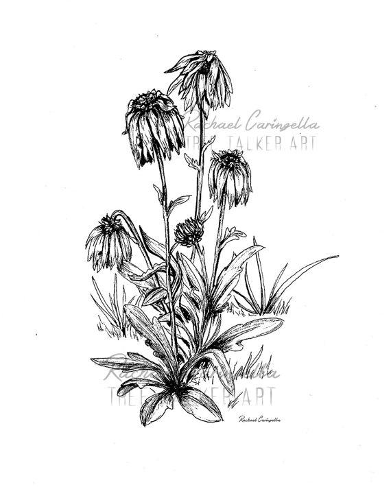 570x710 Dying Flowers Illustration Giclee Fine Art Print Pen