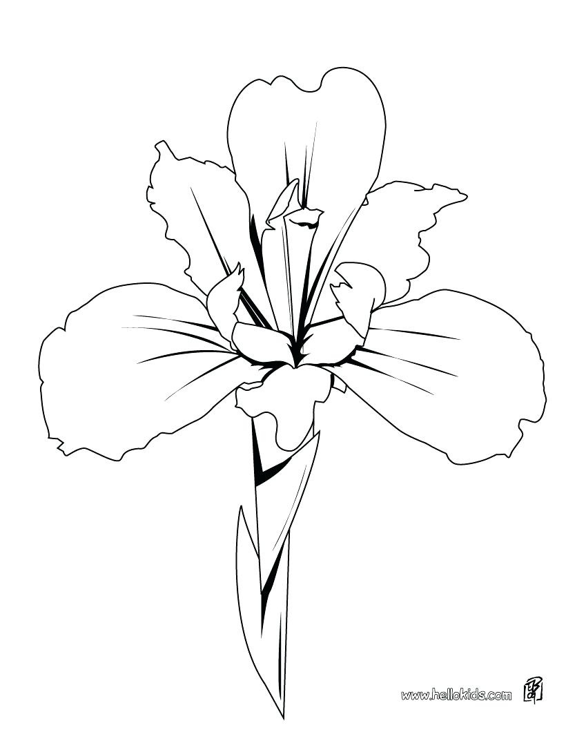 820x1060 Coloring Pages ~ Flower Coloring Pages Printable Amazing Free