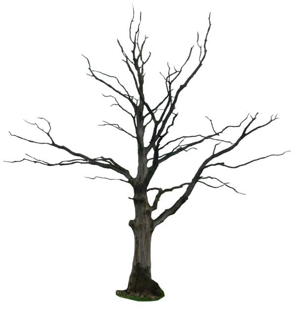 600x626 Dead Tree Png By Gd08