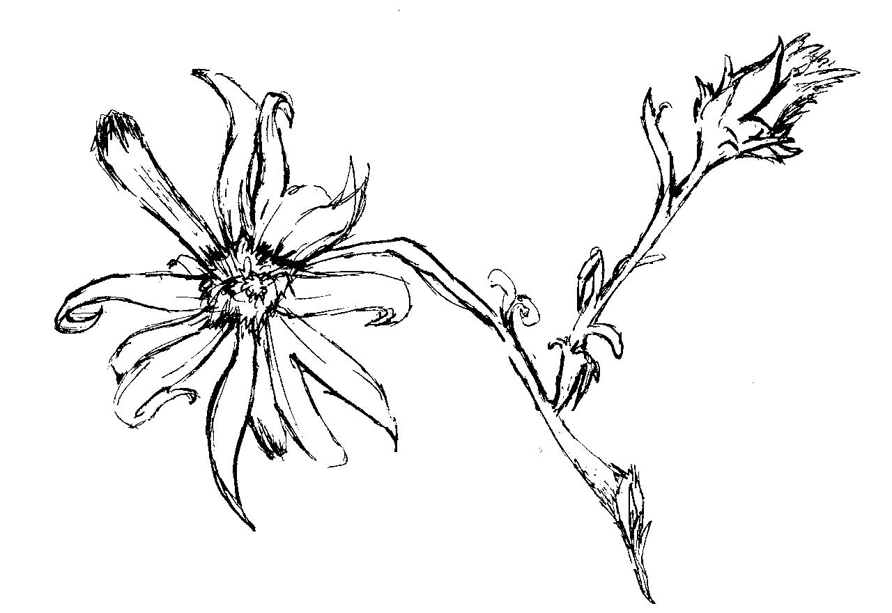 1280x880 Inky Flower By Fike Iii