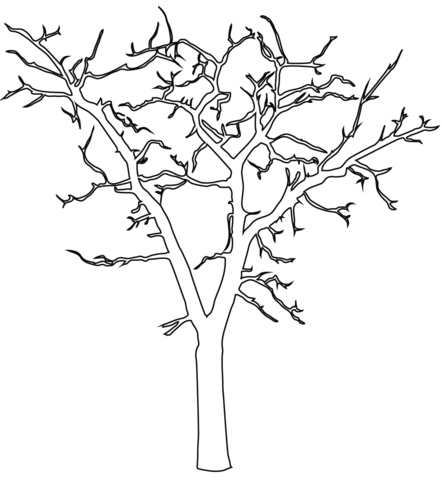 442x480 Dead Tree Outline Coloring Page Free Printable Coloring Pages