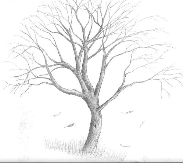 Dead Oak Tree Drawing At Getdrawings Com