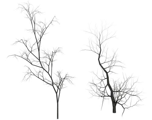500x397 Dead Trees By Texelgirl Stock