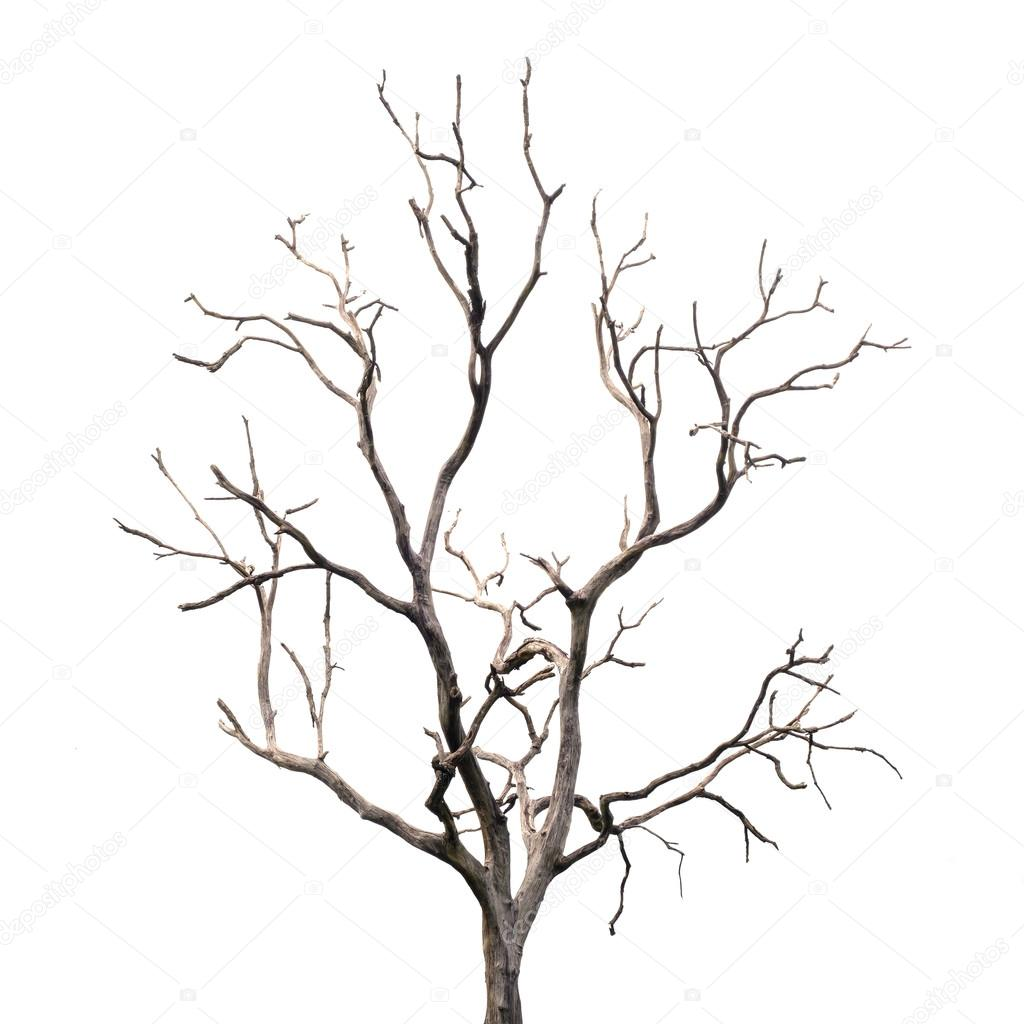 1024x1024 A Tree Drawing Without Leaves Stock Photos, Royalty Free A Tree