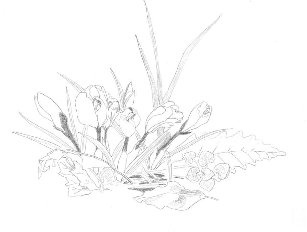 1025x777 Dead Plant Drawing A Tiny Money Plant Just, Dead Plant Clip Art