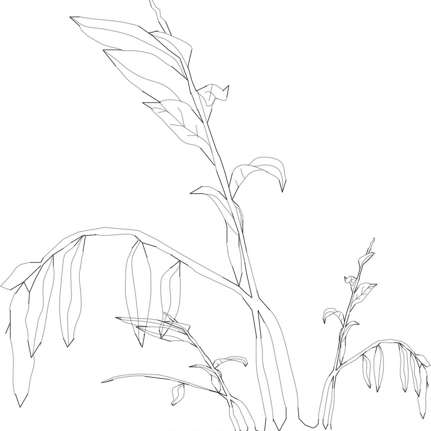 1500x1500 Dead Plant Drawing Drawing Reflection Process, Dead Plant Cartoon