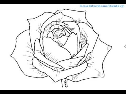 480x360 How To Draw An Open Rose Flower Yzarts Yzarts