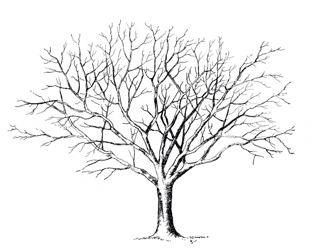1024x816 Drawing A Tree Without Leaves Sketch Of Dead Tree Without Leaves