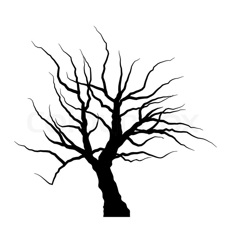 760x800 Illustration Sketch Of Dead Tree Without Leaves , Isolated