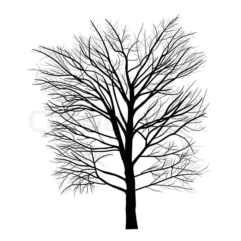800x800 Trees With Dead Branch Stock Vector Colourbox